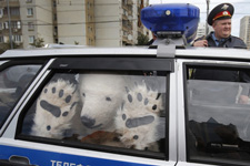 Russian cops put this furry protester on ice.