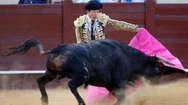 bullfight2
