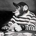 Gambling-Monkey