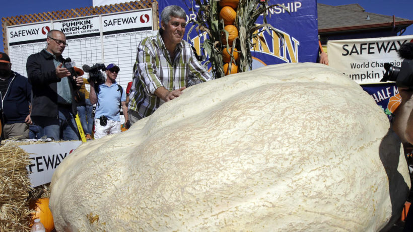 Steve Daletas, center, of Pleasant Hill, Ore. poses for photos with his his pumpkin, which weighed in at 1969 pounds to win the Annual Safeway World Championship Pumpkin Weigh-Off Monday, Oct. 12, 2015, in Half Moon Bay, Calif. (AP Photo/Marcio Jose Sanchez)
