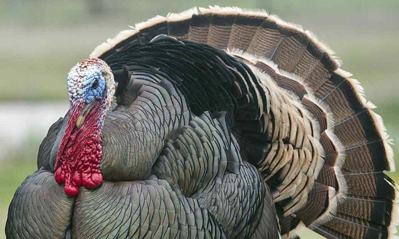 Worst Thanksgiving Ever