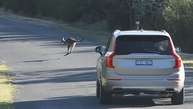 Volvo-kangaroo-detection-Australia