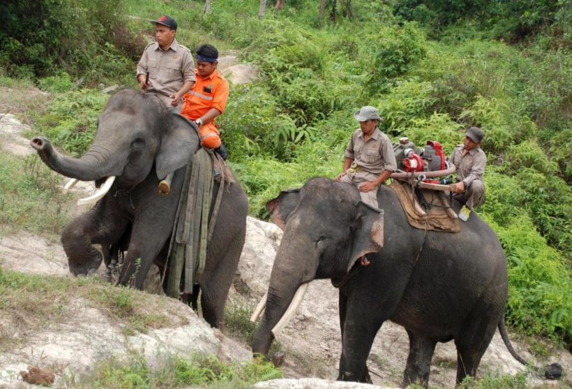 In this Tuesday, Nov. 10, 2015 photo, forestry officials ride on the back of elephants laden with hoses and a water pump as they patrol an area affected by forest fire in Siak, Riau province, Indonesia. Officials in Indonesia are using trained elephants to carry water pumps and other equipments to help patrol burned areas in the national forest to ensure that fires don't reappear after smoldering beneath the peat lands. (AP Photo/Rony Muharrman)