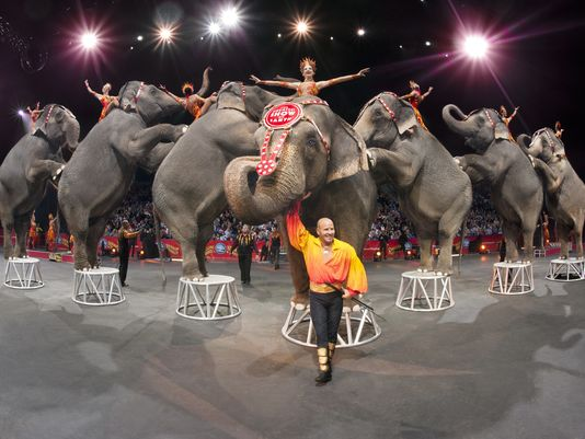 ringling-elephants