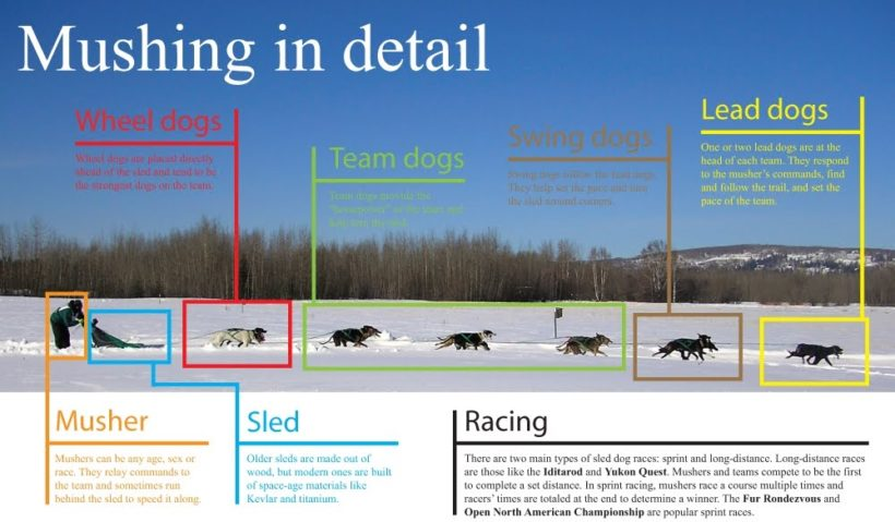 mushing-graphic