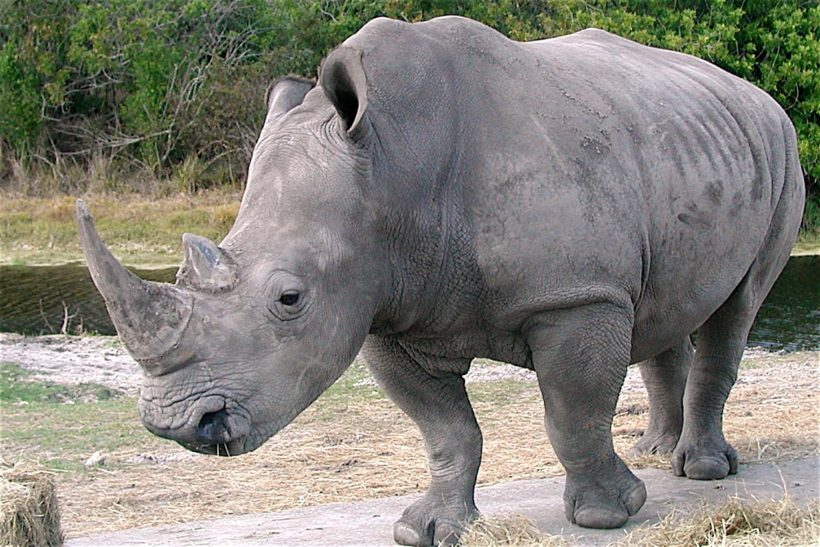 Vegetarian Zookeeper Bites Rhinoceros—Now That Would Be News