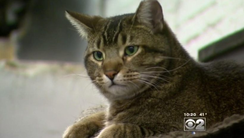feral-cat_CBSNews