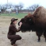 Do  you need a bison?