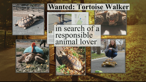 tortise-walker