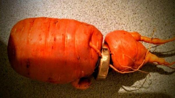 carrot-unearths-wedding-ring