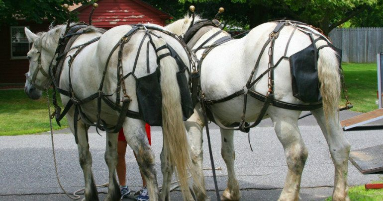 When Horses and Freedom of Religion Collide