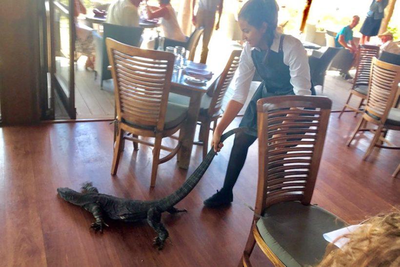 Waitress drags huge lizard out of Australian restaurant