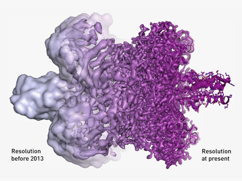 Nobel in chemistry for amazing cryo-electron microscopy