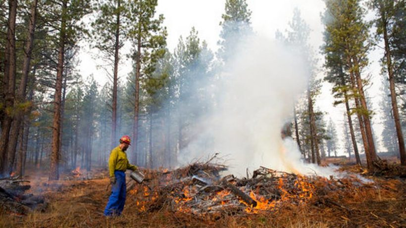 Congress proposes allowing states to thin out forests before fires consume everything