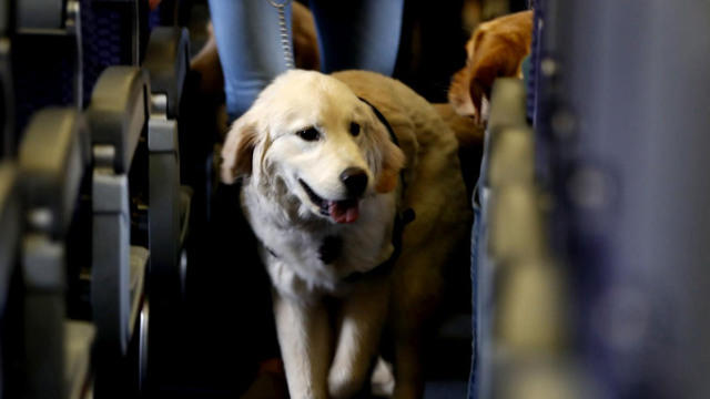 "Delta imposes new rules for service dogs after ""serious incidents"""