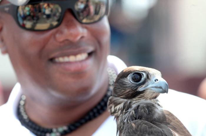 Birds of prey will scare the gulls away