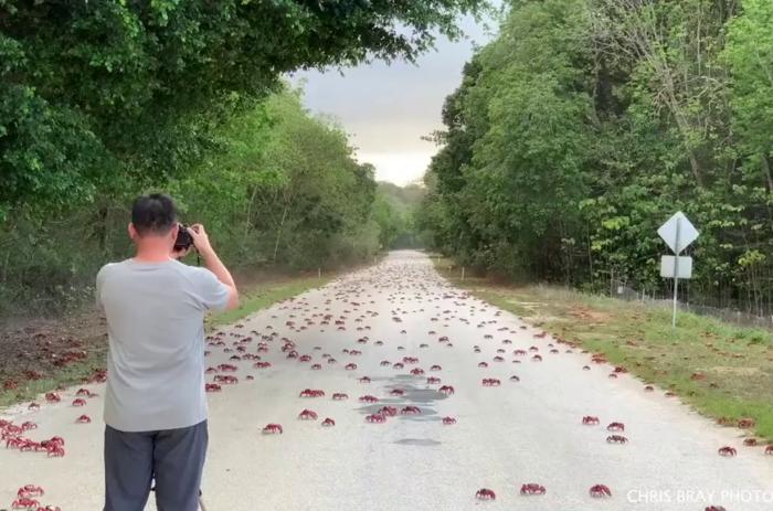 Man designs 'car shoes' to avoid squashing crabs