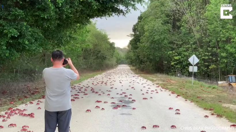 Man designs 'car shoes' to avoid squashing crabs