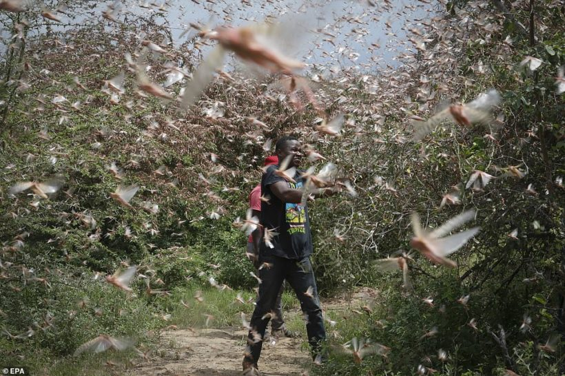 World #2 – Swarms of Locusts Spread Across East Africa