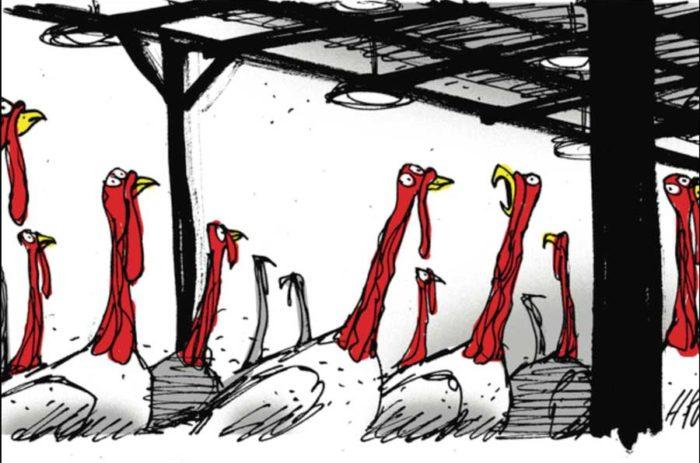 Turkeys on Thanksgiving